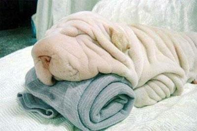 les puedo garantizar que ahi hay un perrito durmiendo