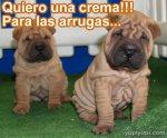 perritos-arrugados