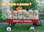 perritos-paseo