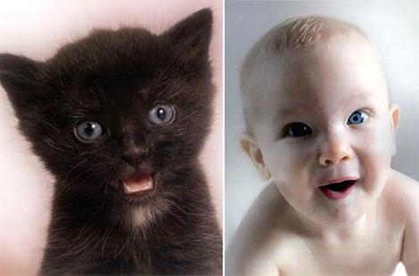 bebes_y_gatos