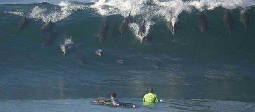 fotos-graciosas-delfines