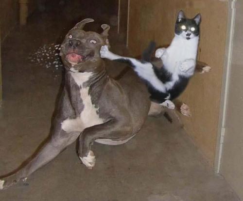 fotos-graciosas-perros-gatos